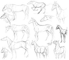 horses sketches by m-u-h-a