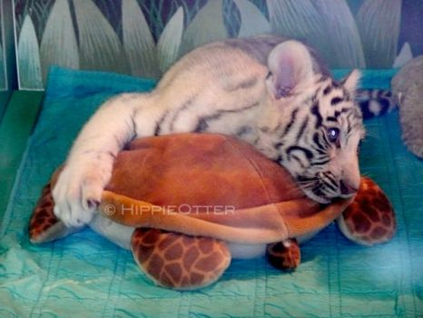 Tiger + Turtle - LOVE by HippieOtter