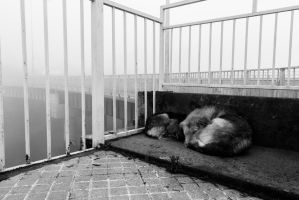 Fog dogs by mapoxcoria