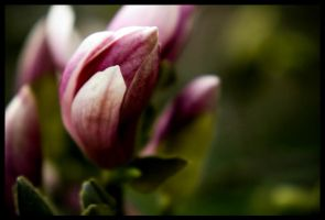 Budding by Findae