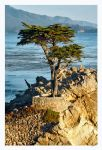 Lone Cypress by shell4art