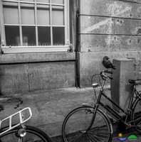 Black and white bird and bicycle by Marcodaz