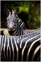 White With Black Stripes. by feudal89