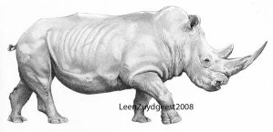 White rhinoceros by LeenZuydgeest