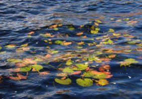 Lily Pads on Water by DiamondLeaf