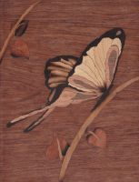 Papillon by EmilieGO