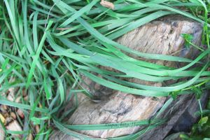 Long grass over rock by lupagreenwolf