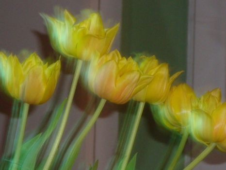 ghoustly yellow tulips by jamesconceptsart78