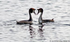 love at the first sight by MT-Photografien