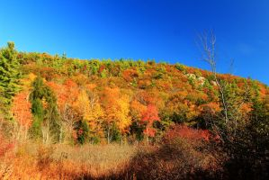 Stock Forest Hillside in Autumn by Celem