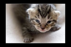 Kittens Kitten E Photo 4 by NicoleSlaughter