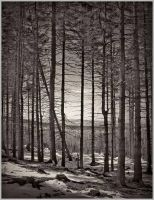 Forest and snow by daaram