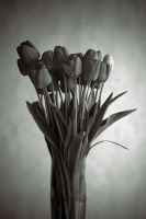 Tulips by NuclearSeasons