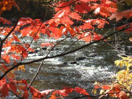 red oak and river by crazygardener