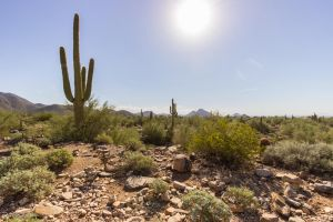Arizona Desert 4 by CyclicalCore