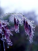 Wet Morning by Birthstone