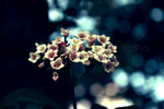 Bokeh by Miss-Invisibl3