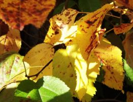 Fall Leaves by Janica23