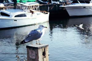 Gull II by withlovexoxo