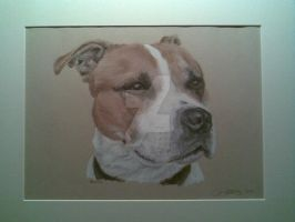 Bertie - Pastel drawing of dog by Pastel-dust