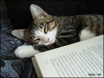 Little reading companion by Nightroaming