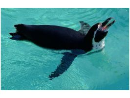 The singing penguin by gregorland