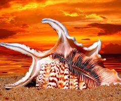 Seashell by ven-of