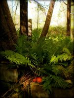 Ferns Turned Wild by tjsviews