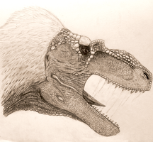 Albertosaurus sarcophagus head study by Sketchy-raptor
