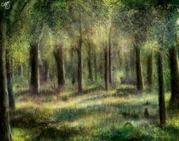 Forest by Colej-uk