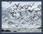 Flock of Seagulls by mohaganbev