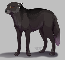 Ollo Commission by DawnFrost
