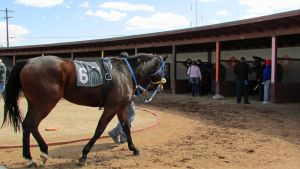 Racehorse Stock 09 by Rejects-Stock