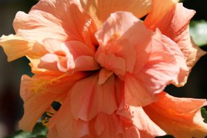 flower at Jerushalem by picture-melanie