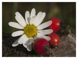 White and red by Vampirbiene