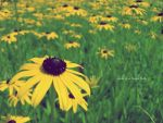 Summertime. by MauiMelle