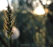 Bokeh of Light by John-Peter