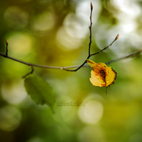 Autumn in my mind. by OliviaMichalski
