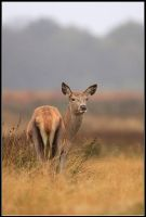 Rain Deer I by nitsch
