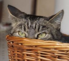 Lucca in the basket by stikyo
