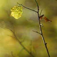 colours of autumn X by Wilithin