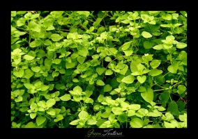 Green Textures by aemilor