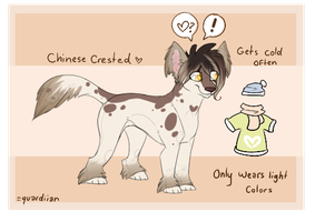 Chinese Crested adopt || taken by quardiian