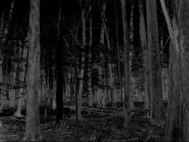Dark Forest by Jaylen