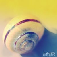 snail blue and yellow by juul07