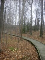 The path to our dreams by AnaturalBeauty