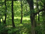 a forest of trees by palominodweezil