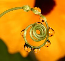 Yellow flower refractions by twilightesque