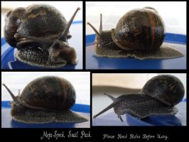 Snail Stock Pack by Meta-Stock