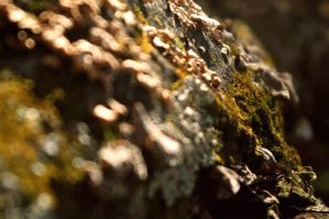 fungus by DYslexiC-photo